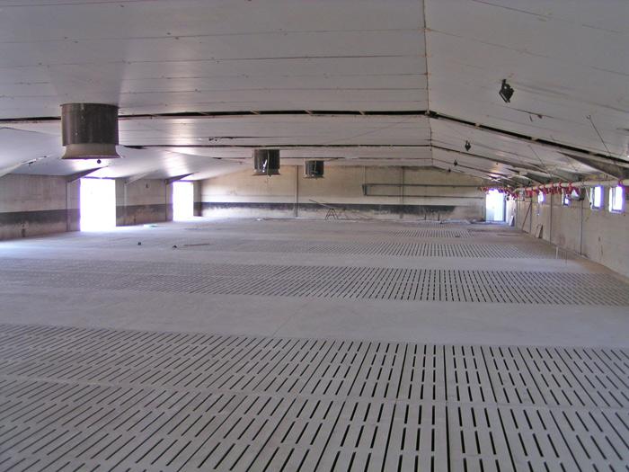 Rekonstruktion der Sauenzuchtanlage Rackith – Stall 1